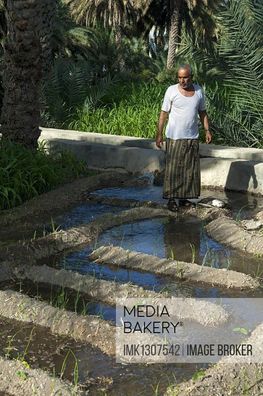 Omani man controlling the irrigation canals in the garden of an oasis, Al Hamra, Ad Dakhiliyah, Oman, Asia