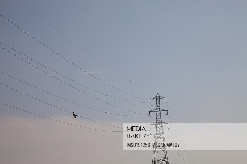 Bird flying near power lines