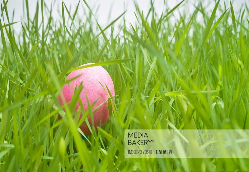 Pink easter egg hiding in grass/n