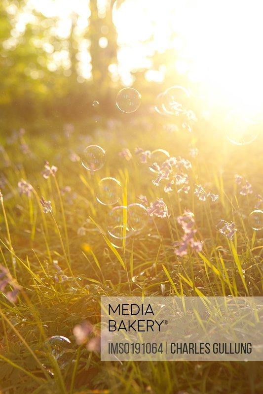 Bubbles floating in meadow