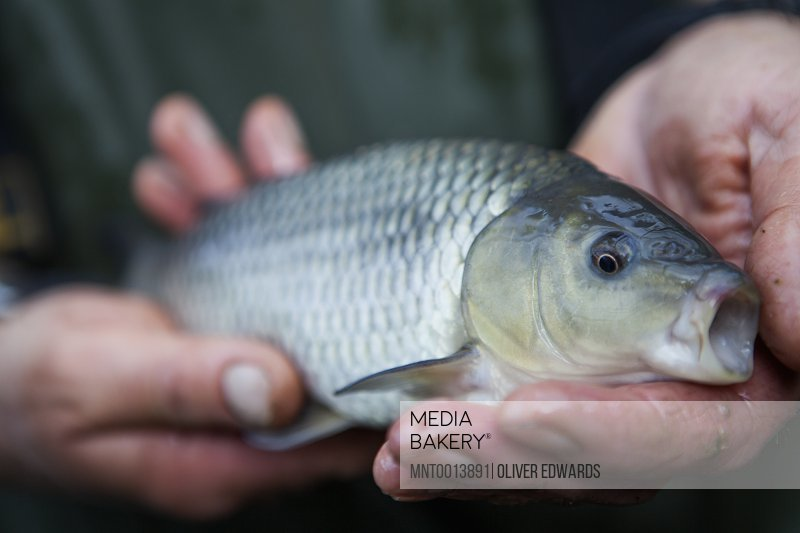 A man holding a young carp fish his fishing catch in his hands