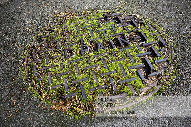 Moss-Covered Manhole Cover