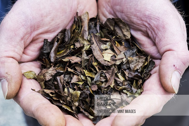 High angle close up of person holding small heap of dried brown tea leaves.