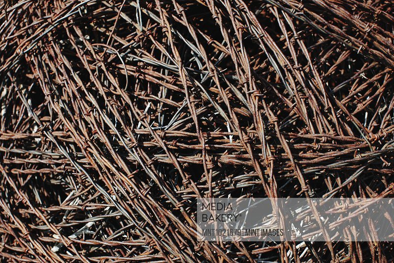 Barbed wire, mass of tangled rusty corroding sharp barbed wire