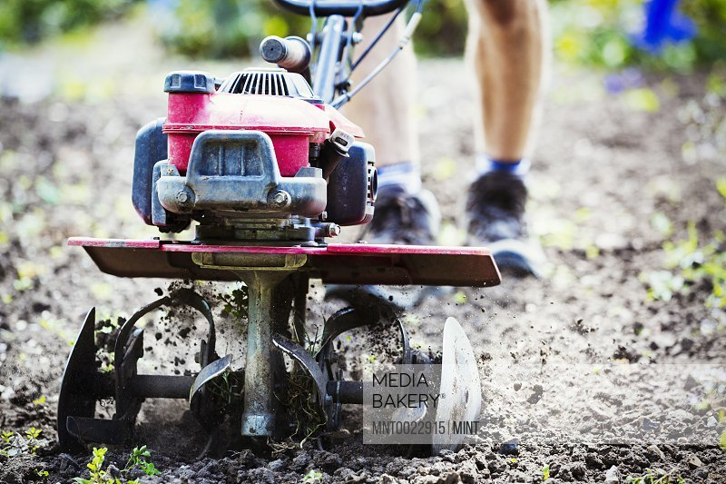 A man using a rotivator on soil in flowers beds in an organic garden