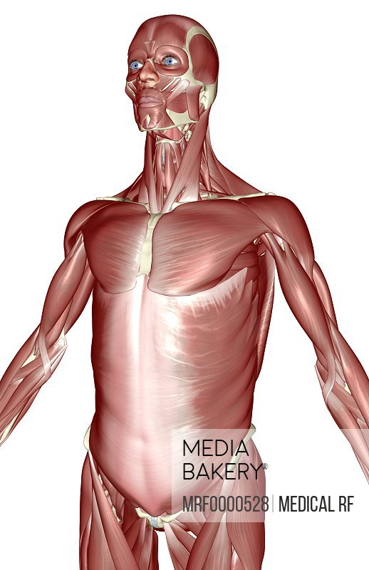 Mediabakery - Photo by Medical RF - An x-ray view of the