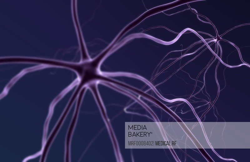 A microscopic view of neurons and their processes.