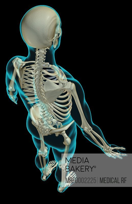 Aorta Stock Photos and Pictures   Getty Images