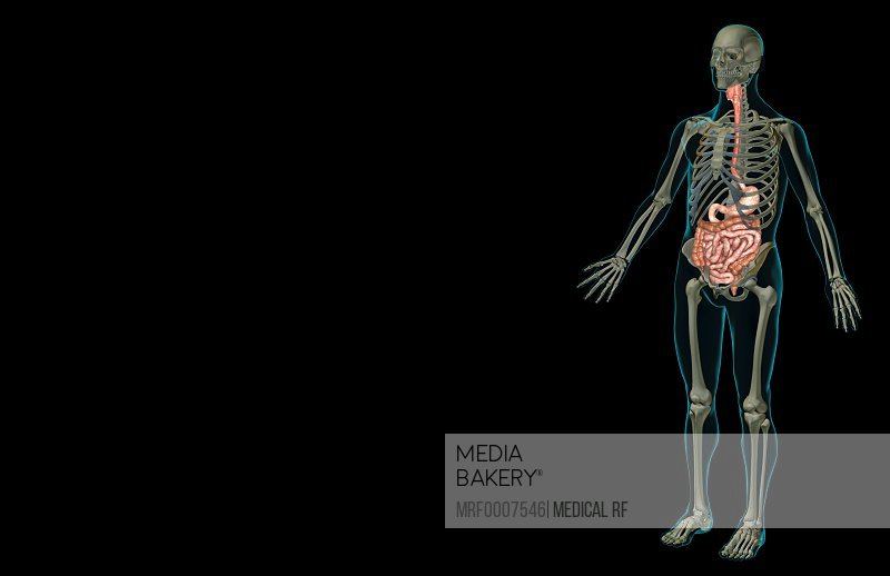 Mediabakery Photo By Medical Rf An Anterolateral View Left Side