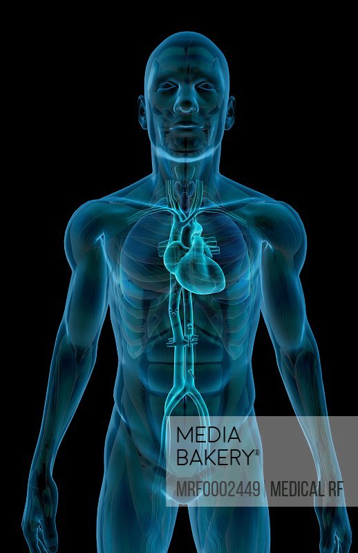 Mediabakery - Photo by Medical RF - An inferior anterior