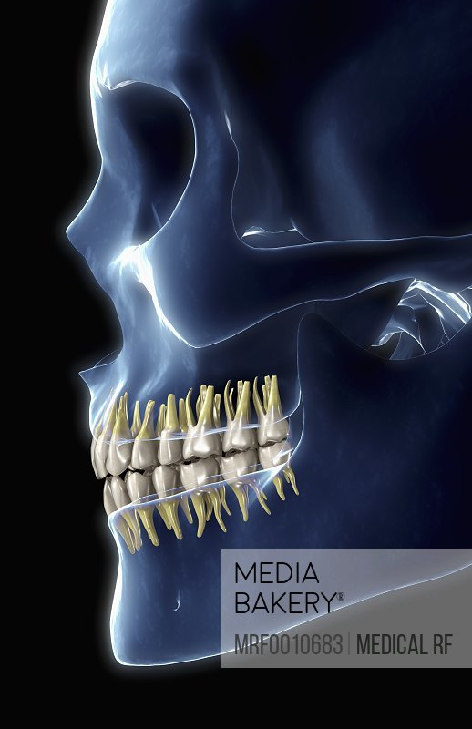 Mediabakery - Photo by Medical RF - A posterior view of