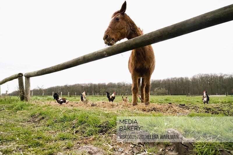 Horse standing in meadow