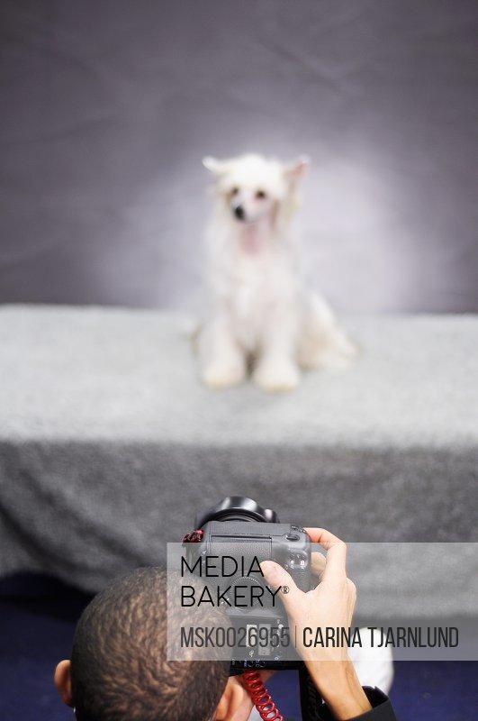 Boy taking photo of dog