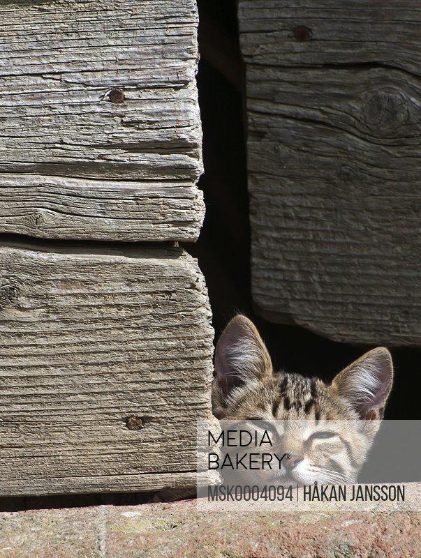 Kitten peeking over wall