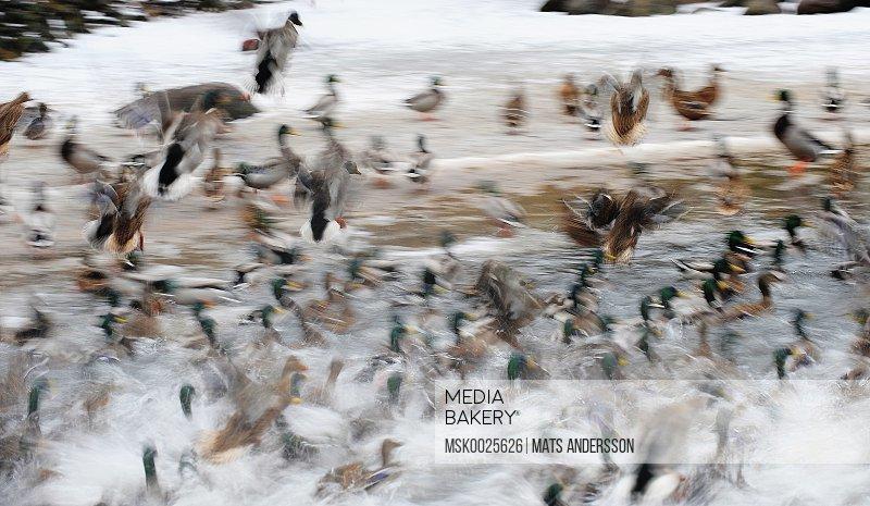 Birds by shore