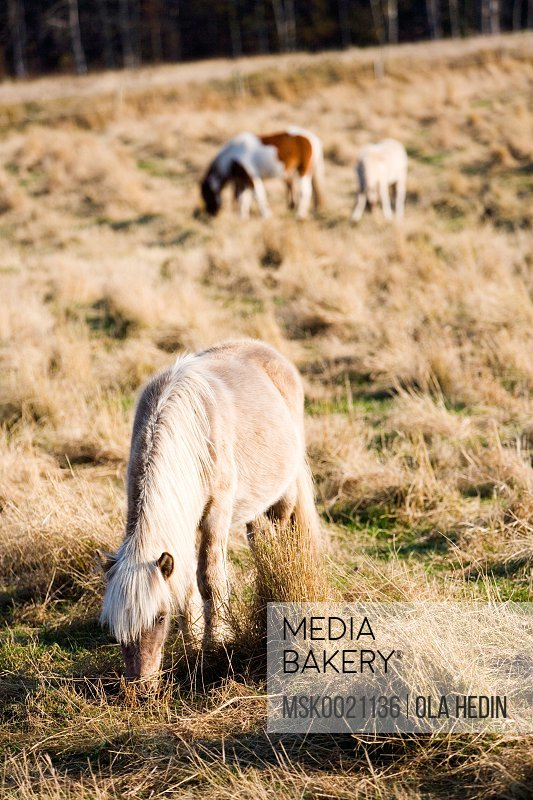 Horses on a filed