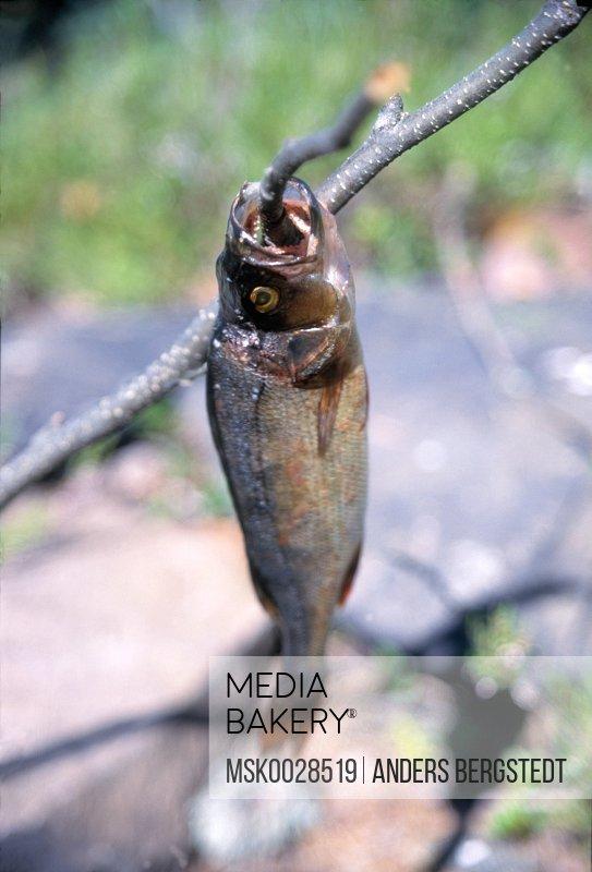 Fish on stick