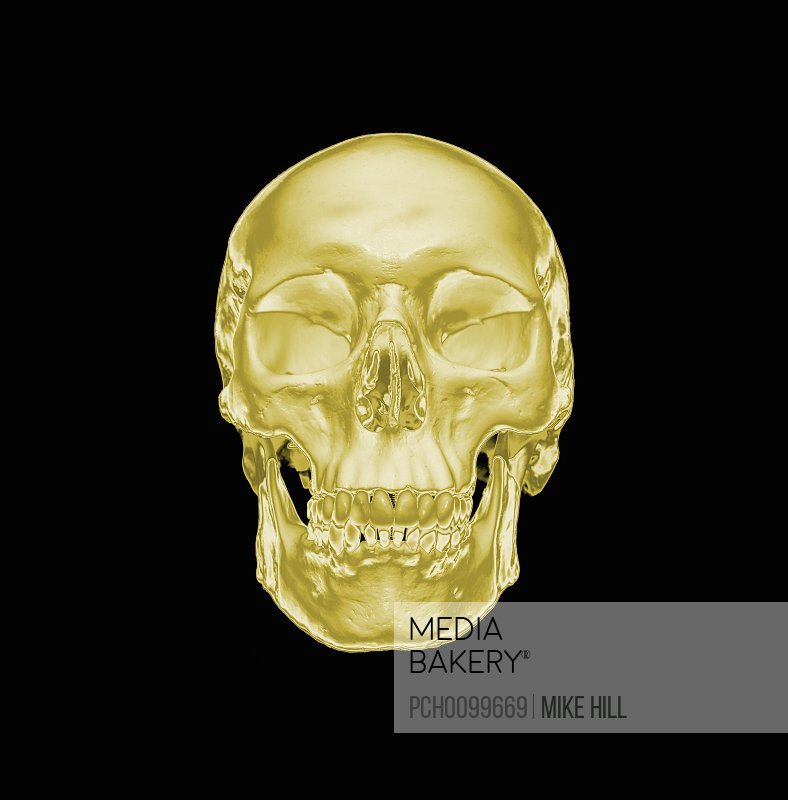 Photo by Photosync Images - Gold human skull on a black background