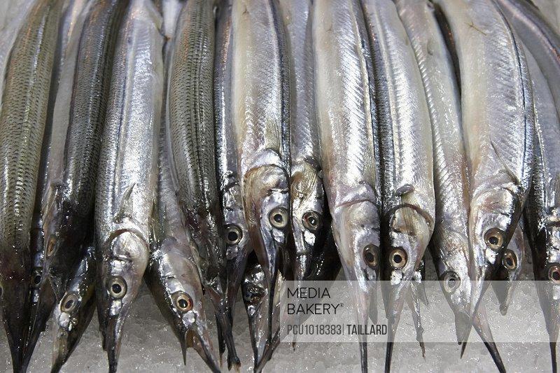 Raw pinfish