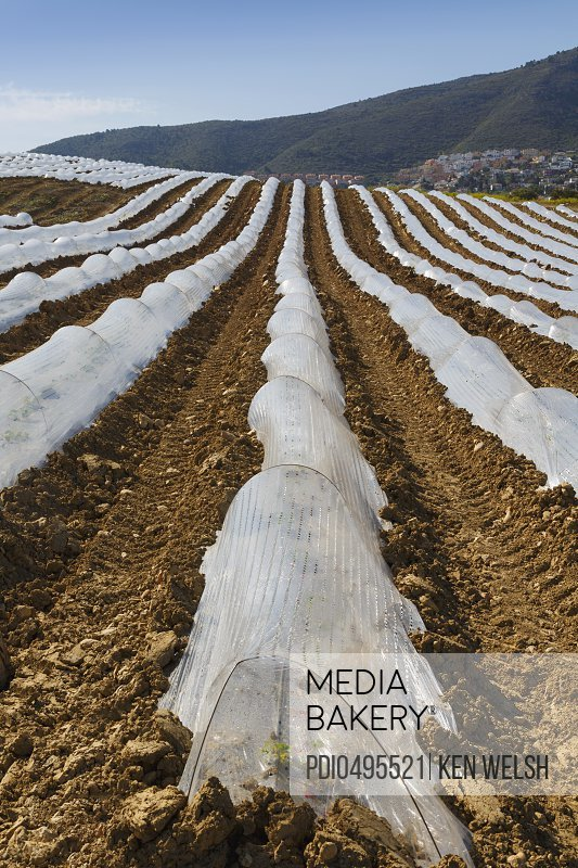 Cultivation under plastic Malaga Province Spain./n