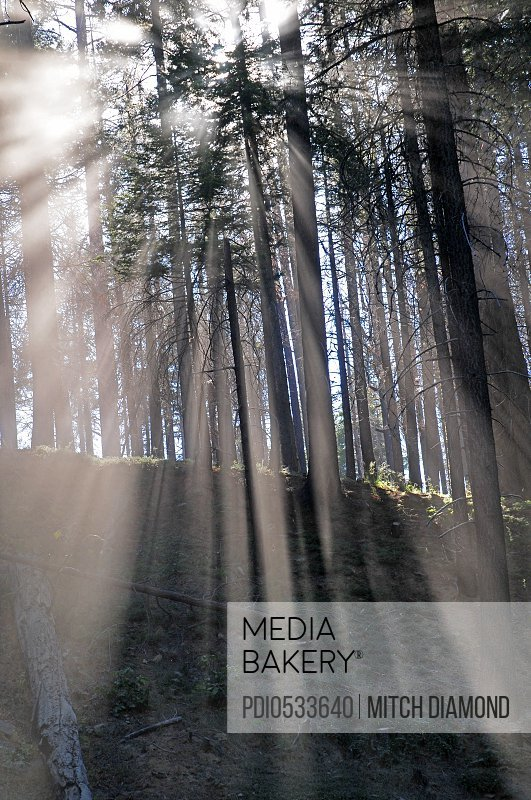 Ethereal forest light