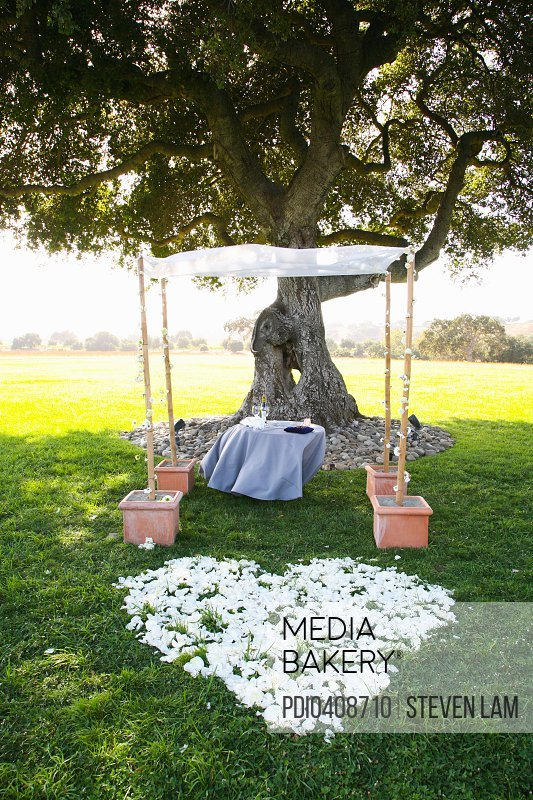 Jewish Wedding Ceremony Items On Table By Oak Tree Ketubah Gl Kiddush Cup Kosher Wine In White Bag For Breaking Huppa