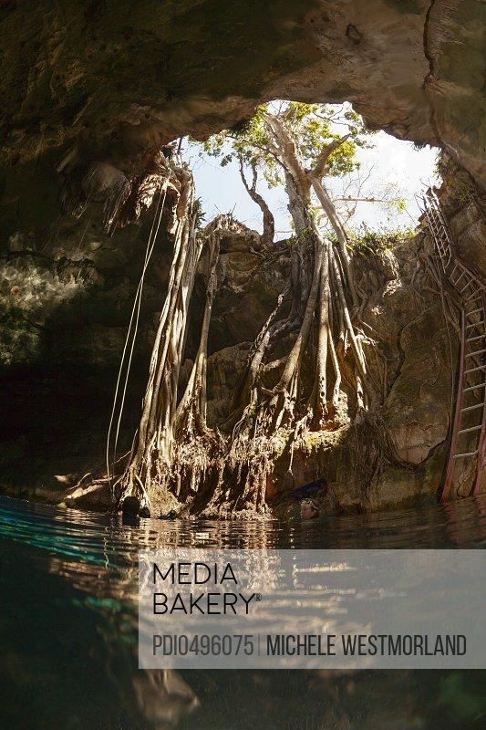 Cenote Entrance