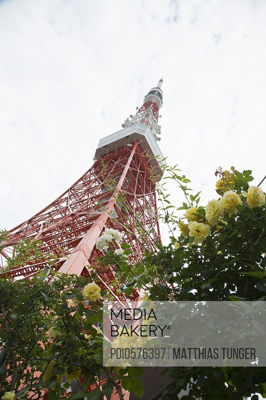 tokyo tower with roses