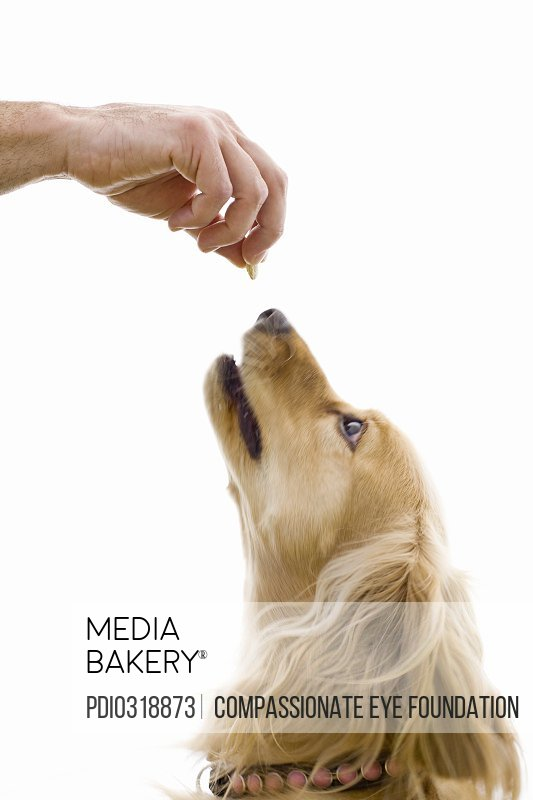 hand holding treat above dog's nose