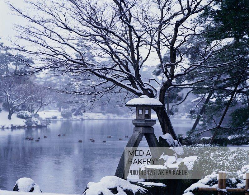 Garden of Snow