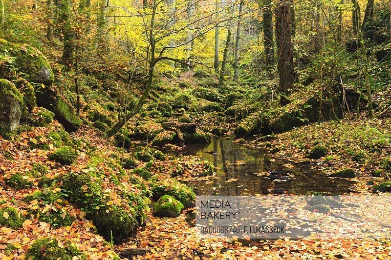 Stream Monbachtal Black Forest Baden-Wurttemberg Germany