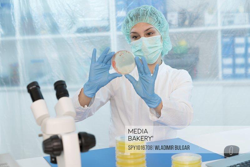 Scientist examining Petri dish