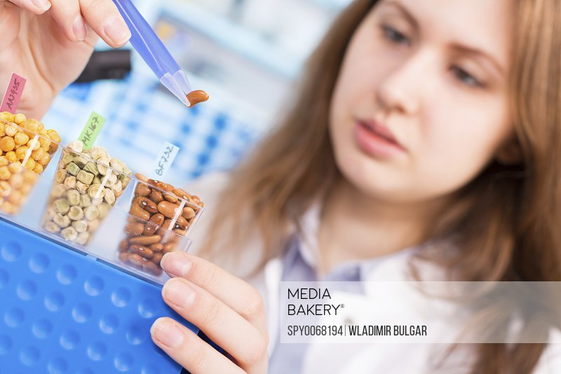 Lab technician testing legumes in lab