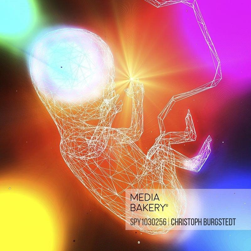 Foetus, illustration