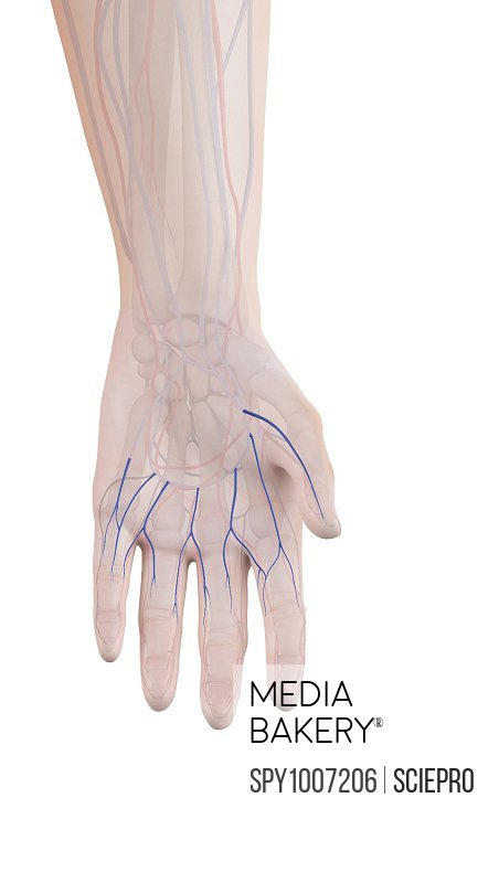 Mediabakery - Photo by Science Photo Library - Human hand veins ...