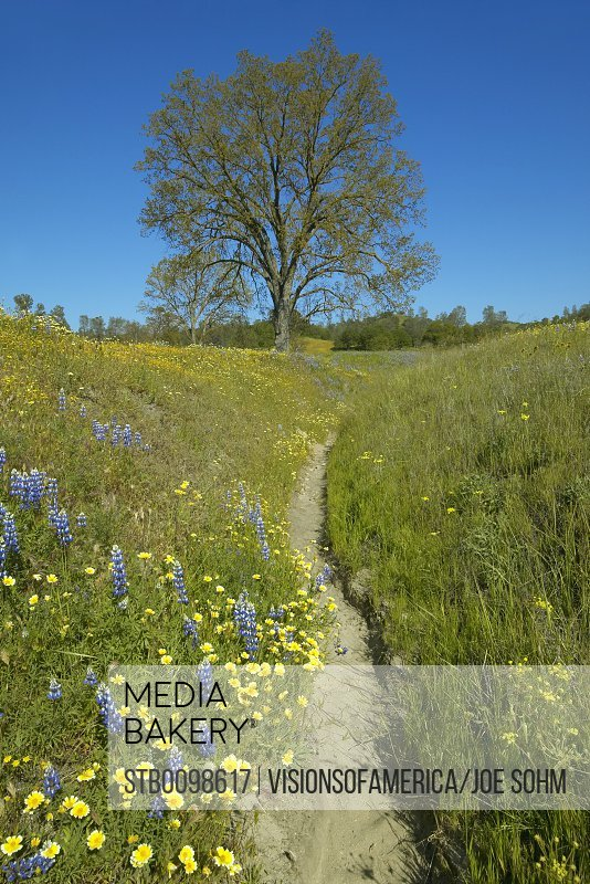 Mediabakery photo by stoked usa california lone tree and usa california lone tree and spring flowers blossoming off route 58 stock photo mightylinksfo