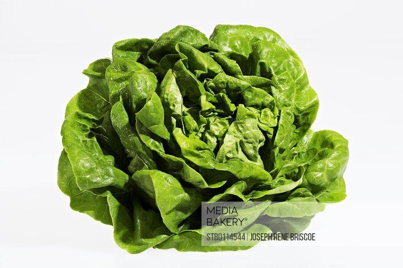 Organic Live Lettuce (horizontal)