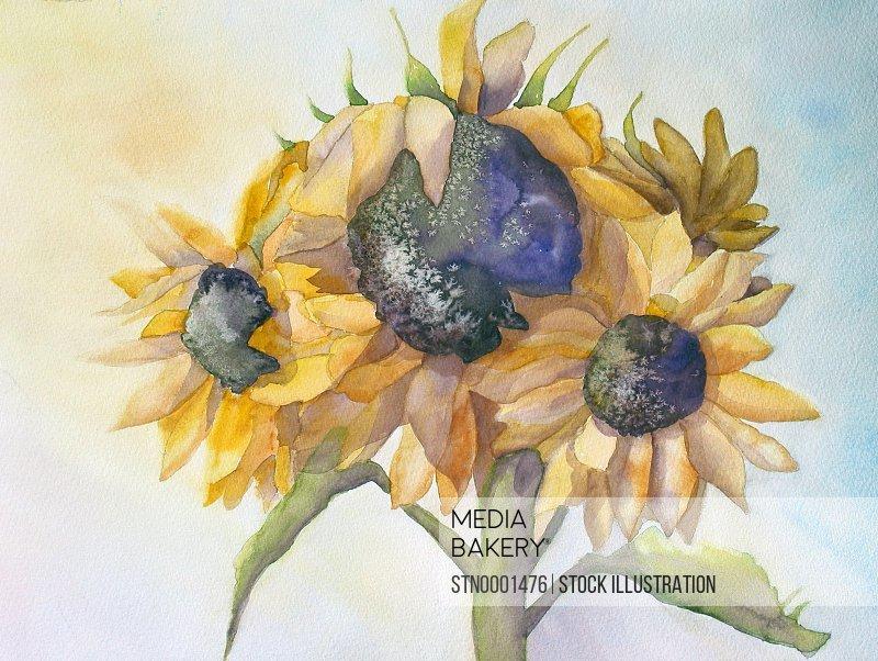 Sunflowers against sky