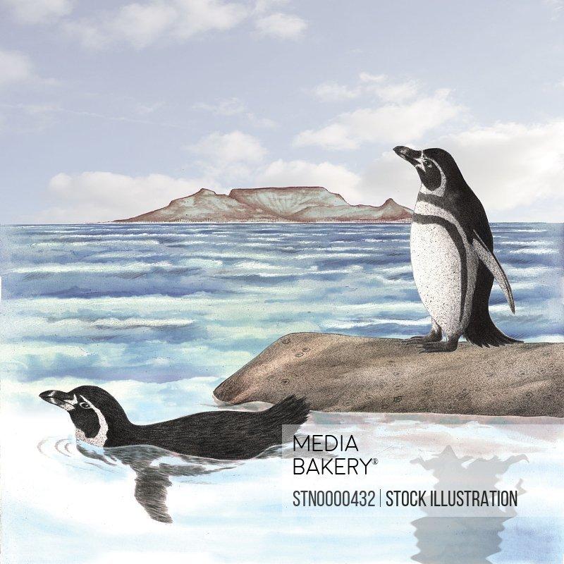 Penguins at seaside