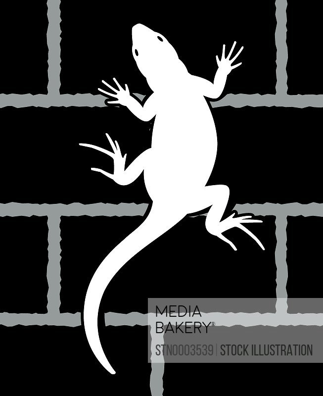 Lizard crawling on brick wall
