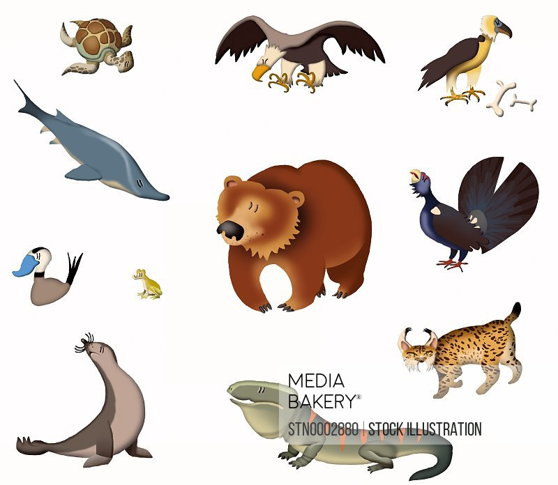 View of various animals