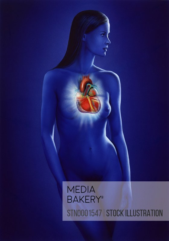 Heart placement in body