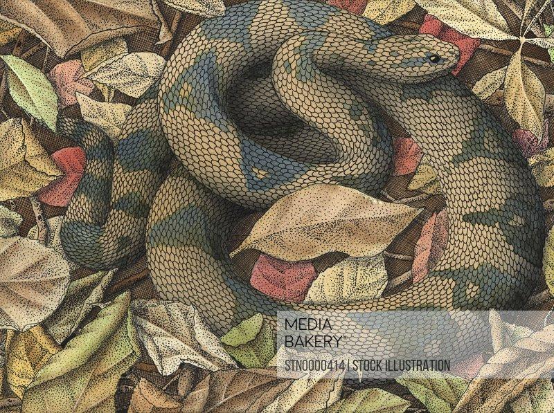 Snake in autumn leaves