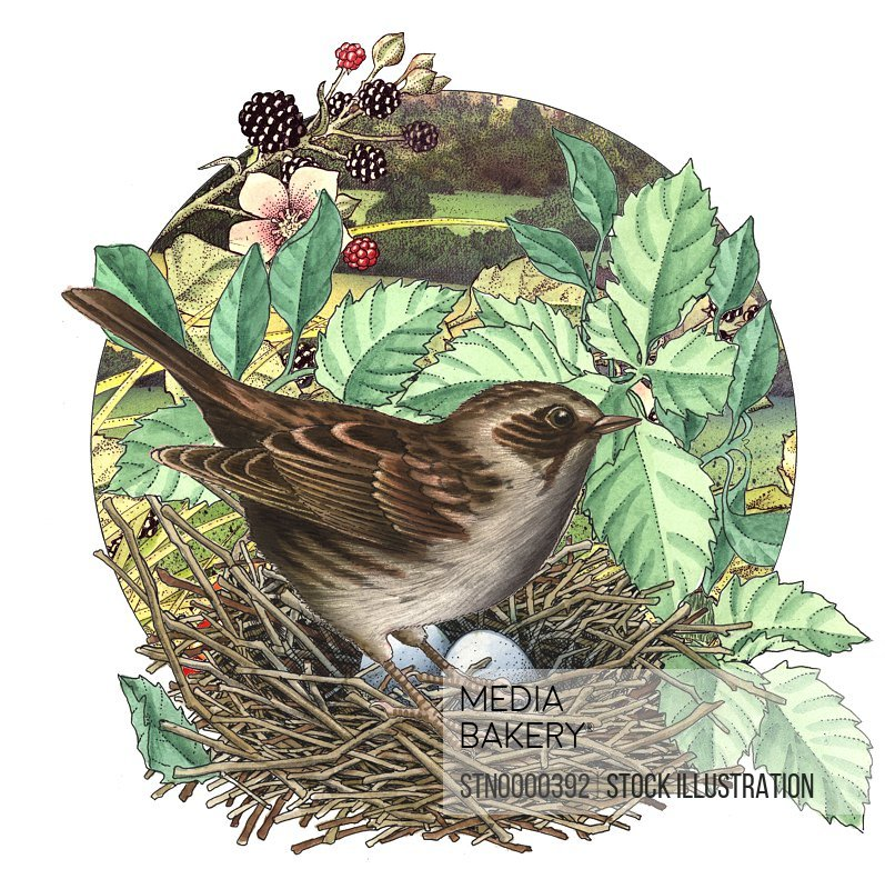 Close-up of bird and animal egg