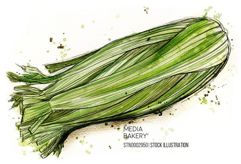 Close-up view of celery