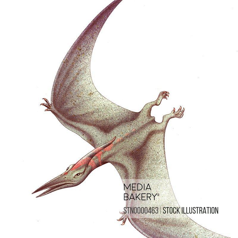 Flying dinosaur against white