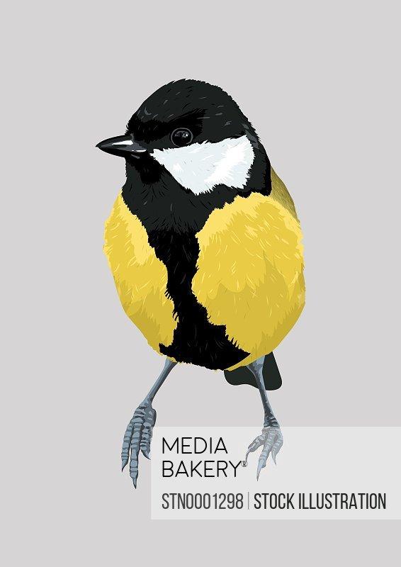 Chickadee bird, grey background
