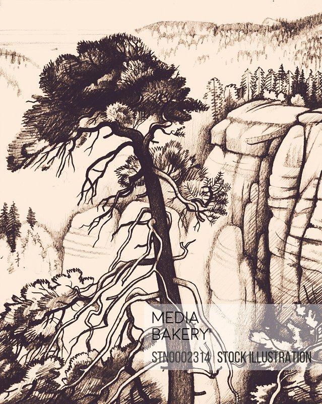 Pine tree growing over canyon