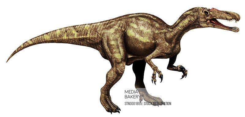 Beige dinosaur against white background