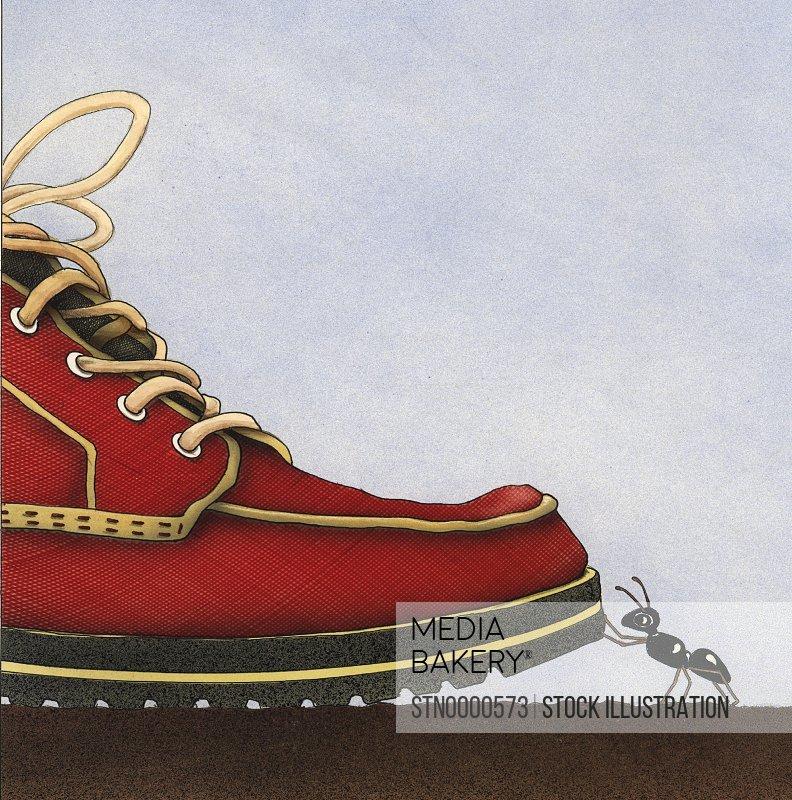 Ant touching shoe